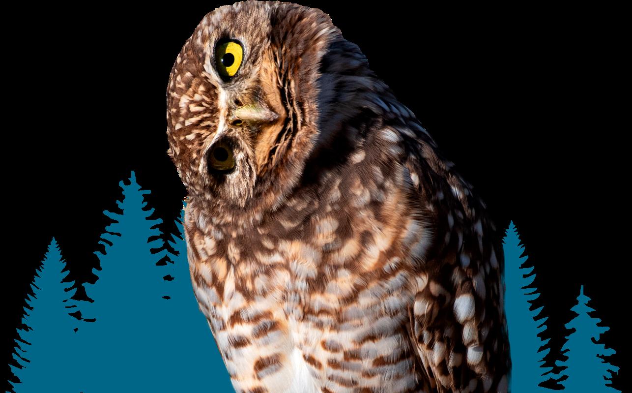 owl faq